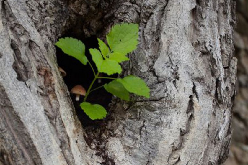 Baum mit Pilz